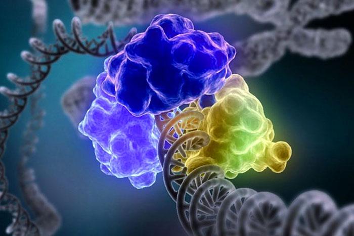 Генетическое окружение заставило гены «замолчать»